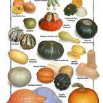 Posters de Alimentos Naturales - Chayote y Calabaza (9x12)
