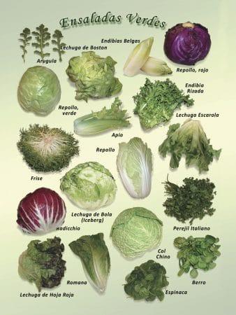 Posters de Alimentos Naturales - Ensladas Verdes (9x12)