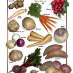 Posters de Alimentos Naturales - Hortalizas de Raiz (9x12)