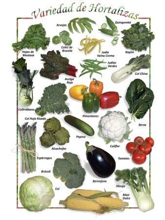 Posters de Alimentos Naturales - Vegetales Mixtos (9x12)